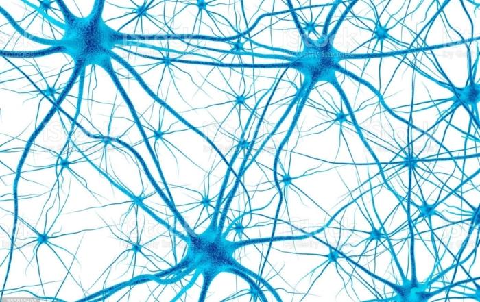 que sabemos del cerebro en la adolescencia